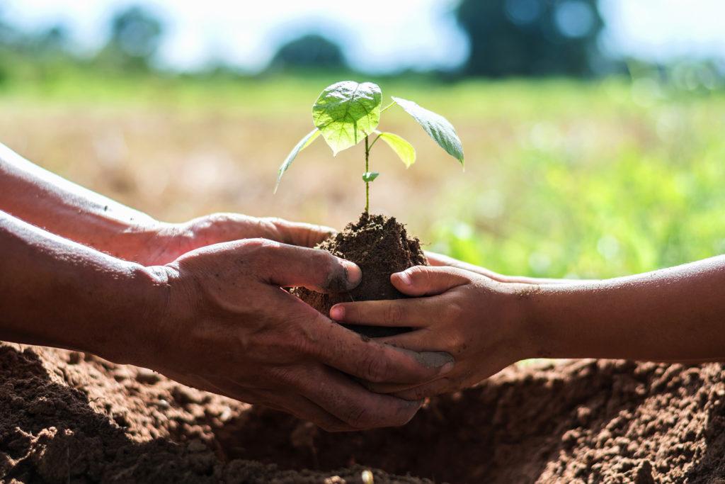 hands-gardening-tips-rewarding-mentorship-experience